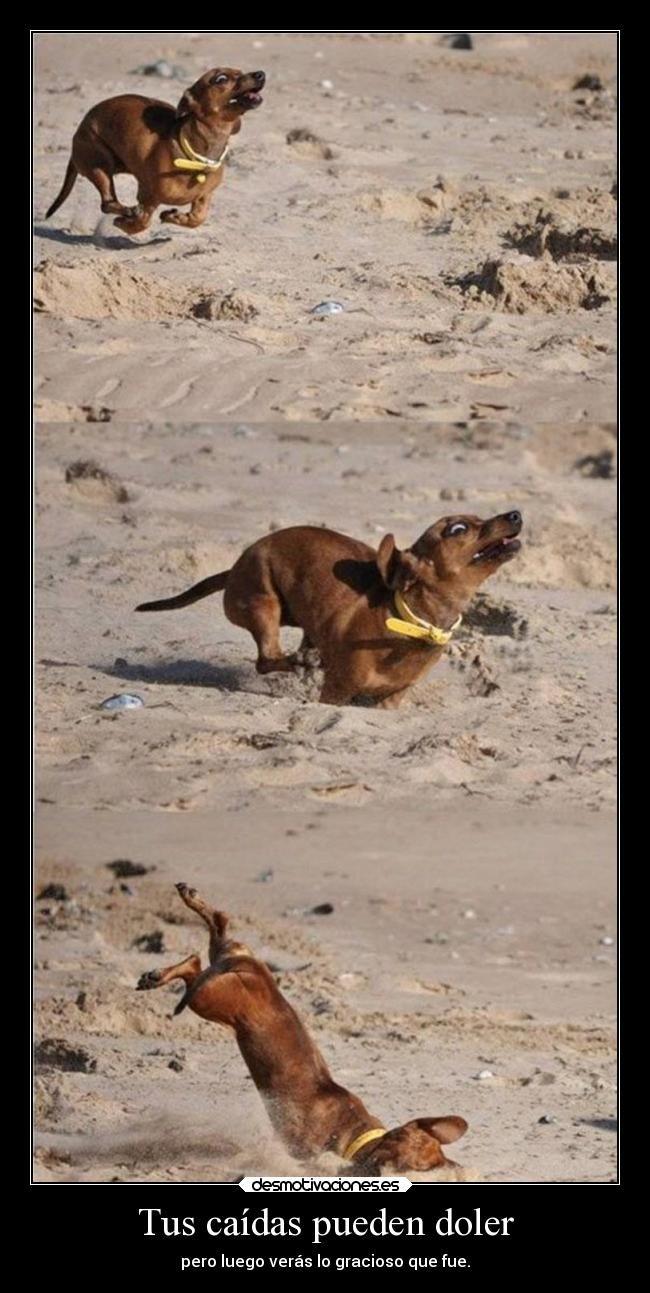 carteles vida risa humor graciosas frases fail dolor chiste animales caida desmotivaciones