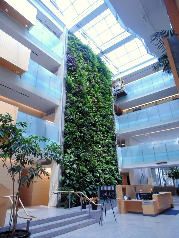 The 'living wall' at Cambridge City Hall filters the air and adds a natural element to this beautiful structure.