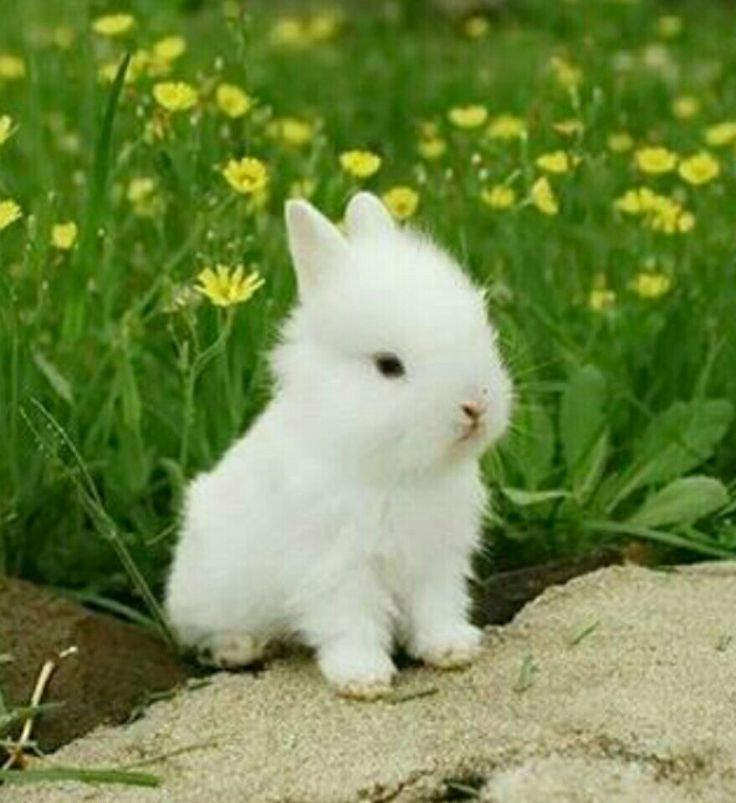 Conejo :)