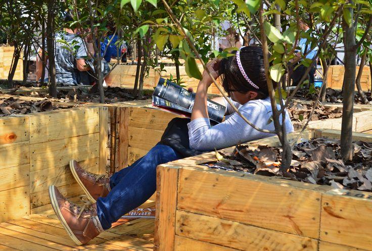 Jueves, 17 de Octubre 2013. Cientos de ciudadanos leen en los módulos de la XII Feria Internacional del Libro del Zócalo en la que participan 208 escritores y 350 sellos literarios distribuidos en 13 carpas ademas de 3 foros de actividades. Foto: Julio Pulido/Secretaria de Cultura