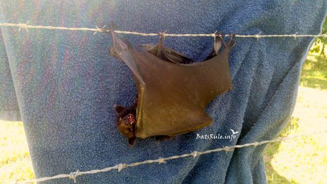 Rescue | Barbed wire | Megabat black