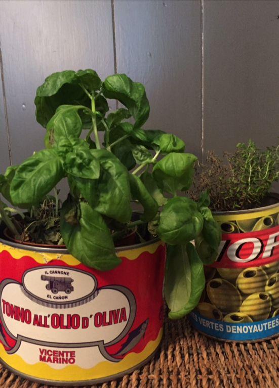 Creatief met kruiden in huis: kruidenplantjes in lege blikken