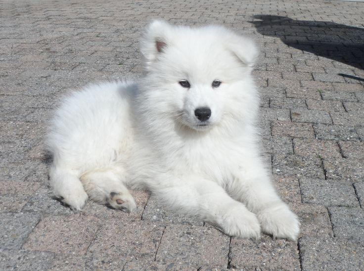a fluffy puppy