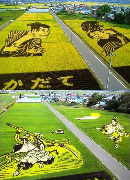 """Rice paddy art"" a painting in the rice paddy, Aomori, Japan."