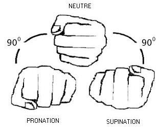 Pronation, Supination and Neutre