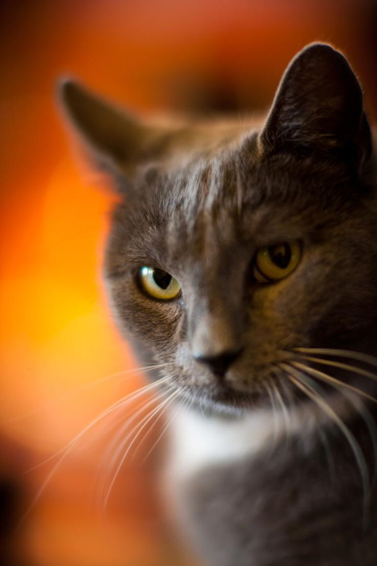 My Adopted Stray Kitty by Mike Reid on 500px