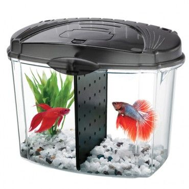 17 best images about betta fish on pinterest glass fish for Caring for a betta fish in a bowl