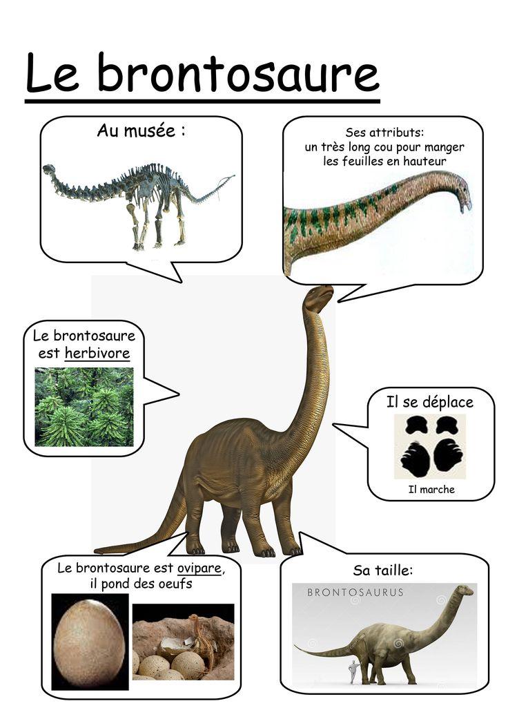 Fiche brontosaure                                                       …