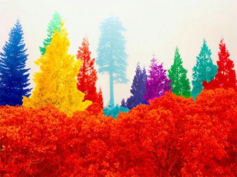 David Benjamin SherryNeon Trees, Benjamin Sherri, Photos Gallery, The Artists, David Benjamin, Colors, Rainbows, Fine Art Photography, Colours