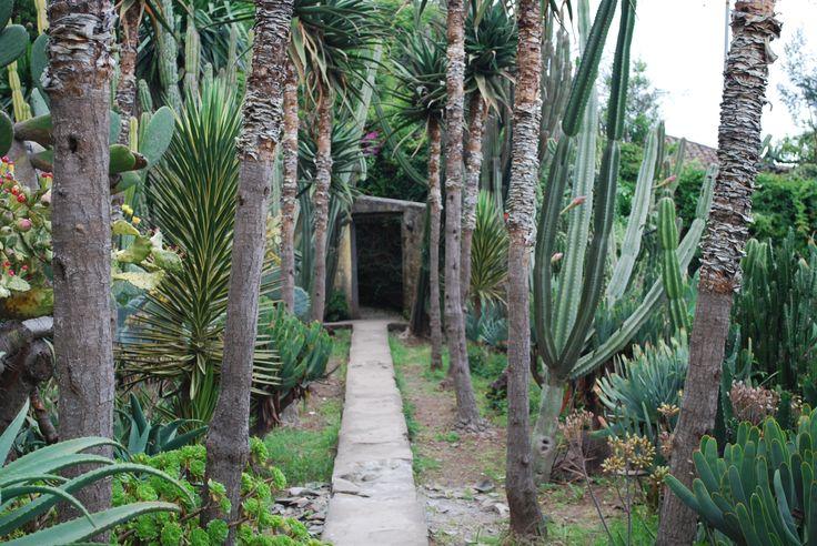 Tropical garden Funchal, Madeira, Portugal.