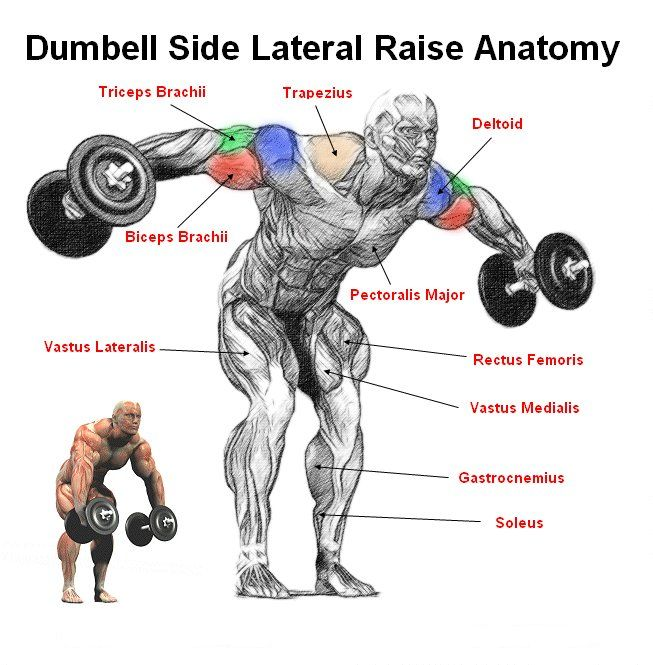BENT OVER DUMBELL SIDE LATERALS RAISES This exercise is a great shoulder exercise that hits all major heads of the deltoids and the trapezius.  When doing a bent over side lateral raise you should always try to keep a slit bend in your arms.