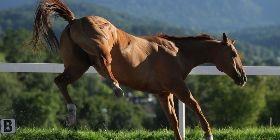 PROBLEMPFERDEARBEIT  Pferde sind von Grund auf friedliebende Tiere. Wurde das Vertrauensverhältnis aber gestört, versuchen sie sich selbst zu schützen und werden so für uns zu Problempferden. Ich unterstützte Dich dabei, Deinem Pferd das Vertrauen wieder zurückzugeben.