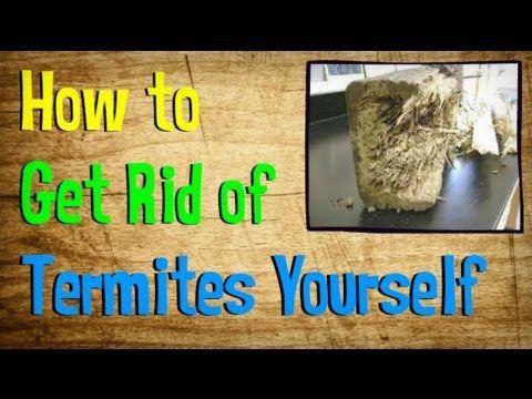 6 DIY Termite Treatments | Termites | Pinterest | DIY and ...