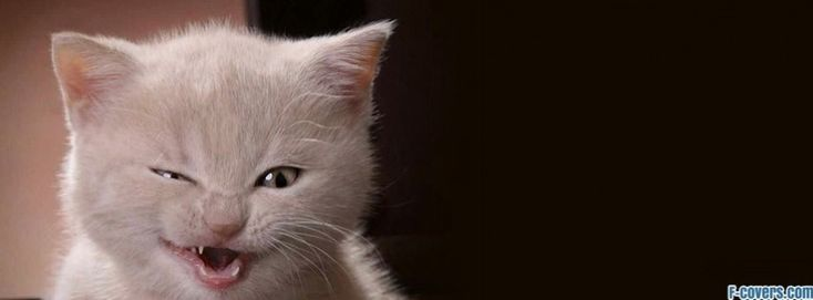 kitty stink eye facebook cover