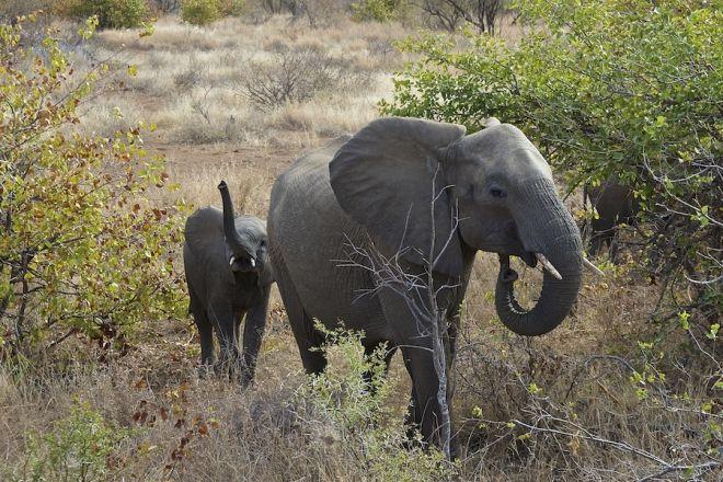 travelwecan.com :: iviaggidimichele.com - Elefanti, è strage! Diffondete il più possibile!!