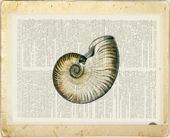 nautilus shell artwork II - vintage nautilus printed on old page from dictionary.