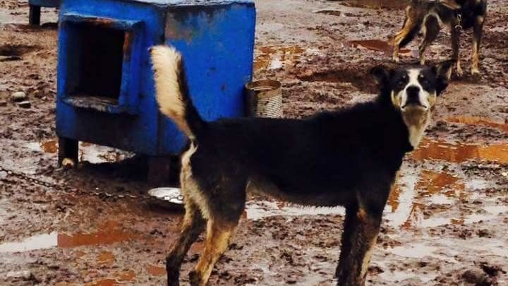 We are asking the Commissioner of the Department of Commerce, Community and Economic Development, Chris Hladick, to revoke the nonprofit corporation status of Crazy Dog Kennels and Canine Rescue (entity #101639). We ask this largely due to the deplorable conditions these dogs are forced to live in -...