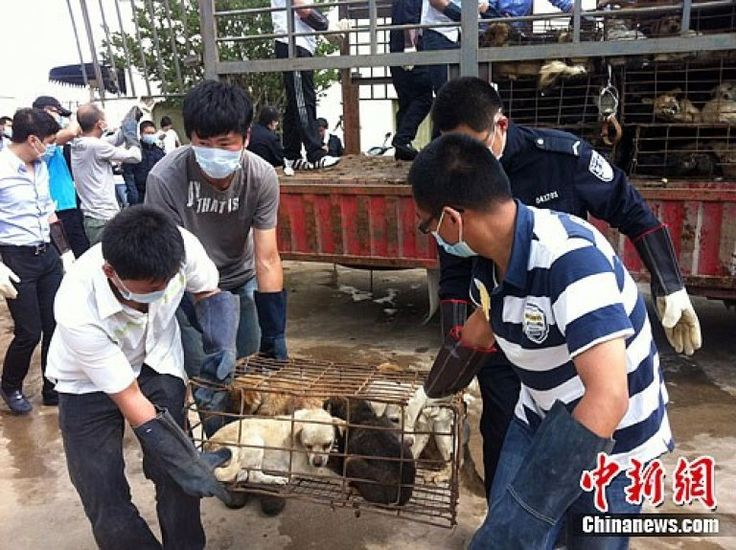 Despite an increase in animal rights in China, many are still poorly treated.