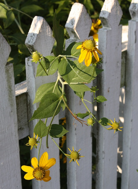17 Best Images About Fences On Pinterest Fence Design