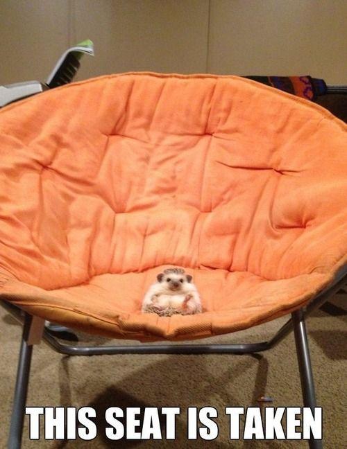 Haha... Hedgehog :)
