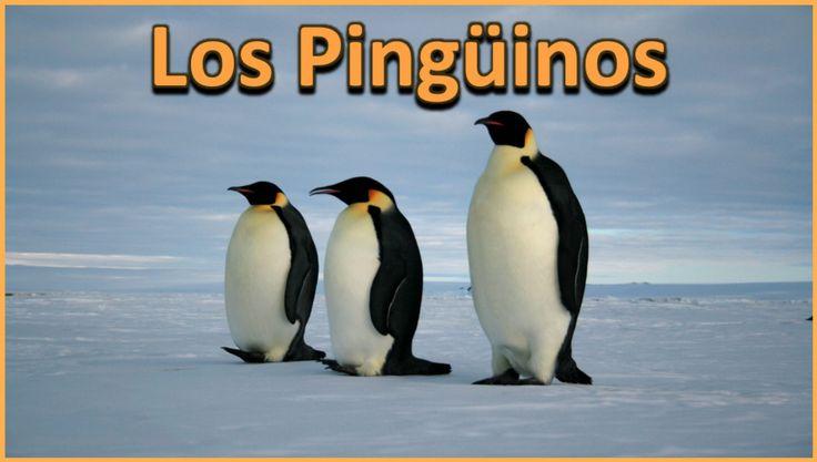 El Pingüino: Vida Oceánica/Aves  Presentación en PowerPoint Los estudiantes conocerán y aprenderán sobre las características que definen a:   * Los pingüinos * Sus apariencias * Sus hábitats * Sus dietas y hábitos de alimentación, y mucho mas.  Por Ryan Nygren (foto por Lin Padgham @ https://www.flickr.com/photos/linpadgham/2589167851/ )