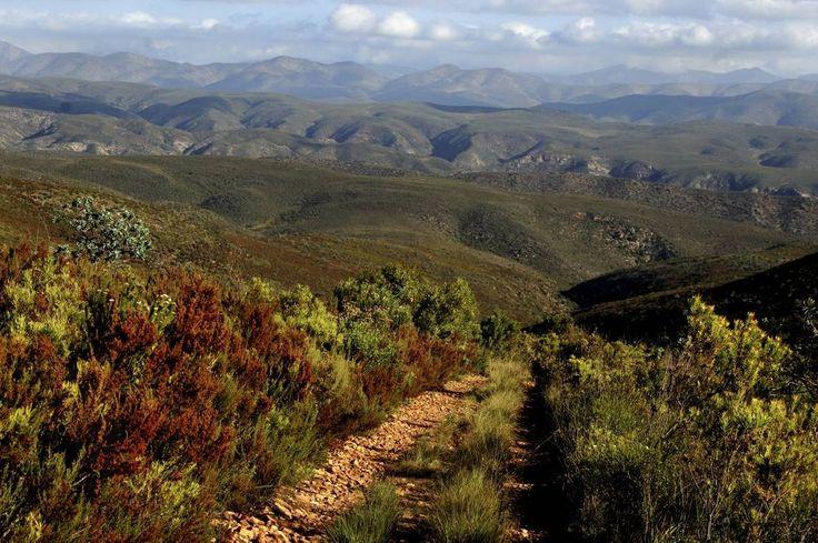 Kouga - A Tour in the Wilderness.