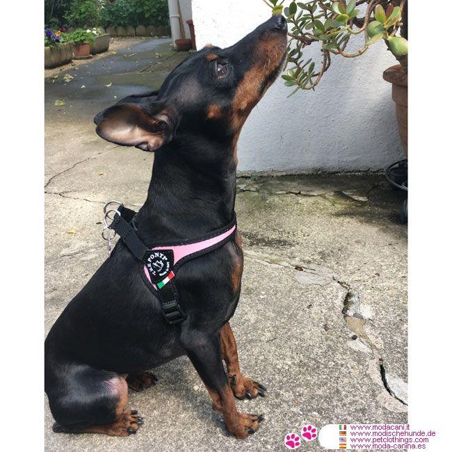 Pettorina Rosa per Cane regolabile sotto la Pancia #ModaCani #Pinscher - Pettorina Rosa Made in Italy per un cane piccolo o medio molto pratica: in soli 2 minuti il tuo cane è pronto per uscire a fare una passeggiata!