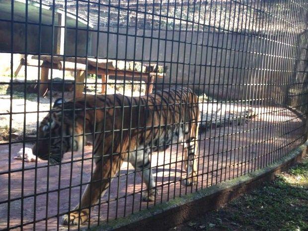Canadauence TV: Menino atacado por tigre pediu para que não matass...
