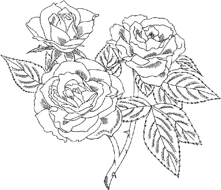 Detailed coloring pages for adults   Roses are one of the most popular flowers in the world, and rightly so ...