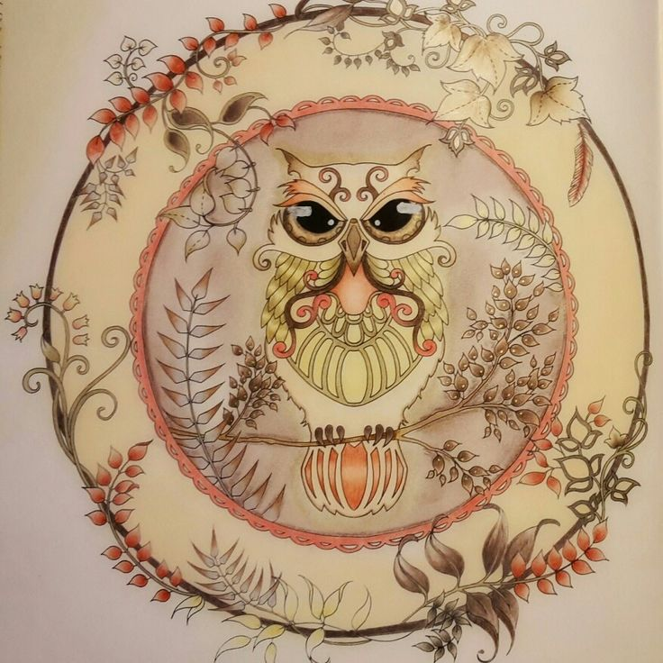 Owl From Enchanted Forest Coloured By Zsuzsiko Instagram