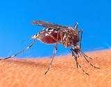 Natural mosquito repellants....and what attracts them.   for you @Maddy Shannon