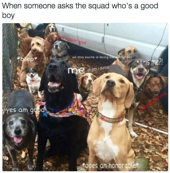 I Ll Be Watching You Funny Animals Dog Puppy Beg Dog: 17 Best Ideas About Dog Memes On Pinterest
