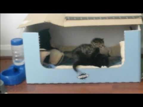FILMATO GATTINI 1 gattini che giocano