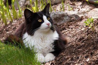 Historia, Cuentos y Otras Hierbas: Felinofobia