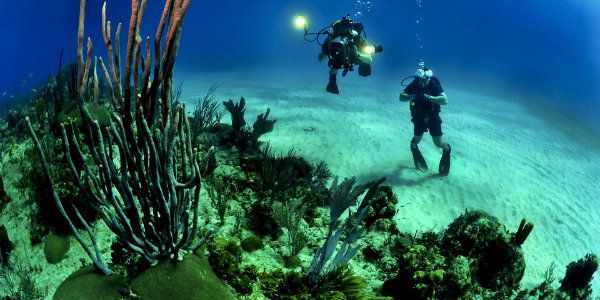 These destinations feature colorful reefs, tons of underwater wildlife and vacations packages, making them among the top places to travel for scuba divers. #traveltips #scuba #scubadiving #adventure #Travel