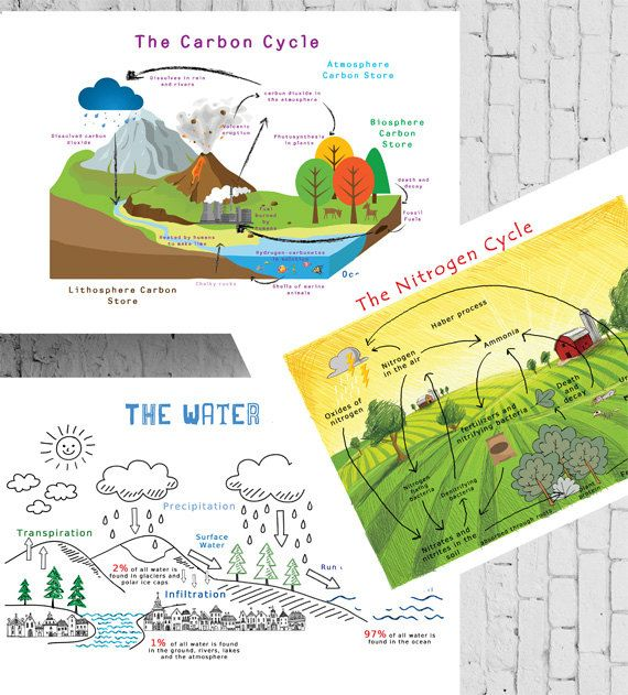 Learn About the Carbon Cycle - ThoughtCo