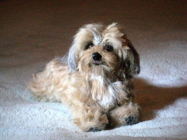 Needle Felted Dog~ Custom Sculpture~Daisy Dog~Charlie by Gourmet Felted by Gourmet Felted, via Flickr