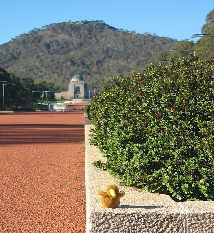 Here's Bilbo, a very fluffy and fuzzy Bilbo, with Old and New Parliament Houses behind him across the lake. Even from here, it's a spectacular vista - from higher up, on the steps of the War Memorial, it's a sight that makes every visitor reach for their cameras.