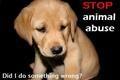Stop Animal Cruelty - Against Animal Cruelty! Fan Art (4505916) - Fanpop