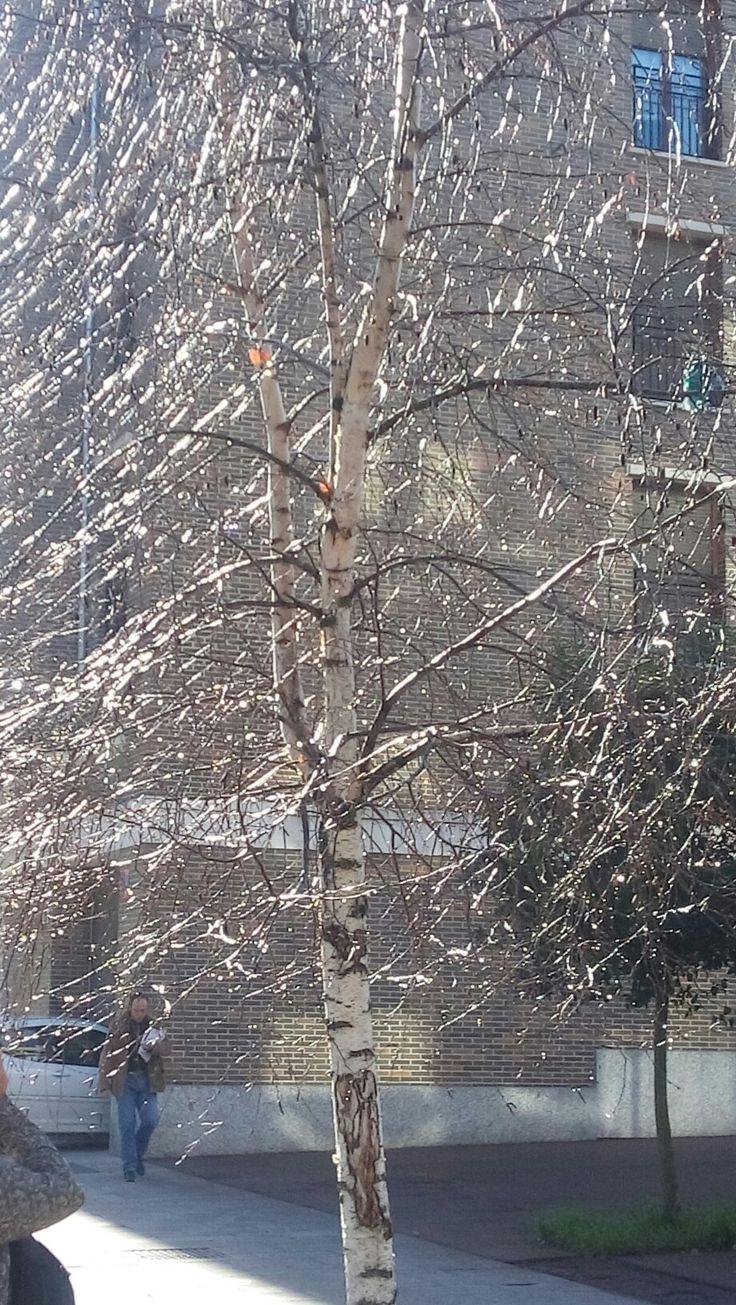 La telaraña de luz atrapa al arbol