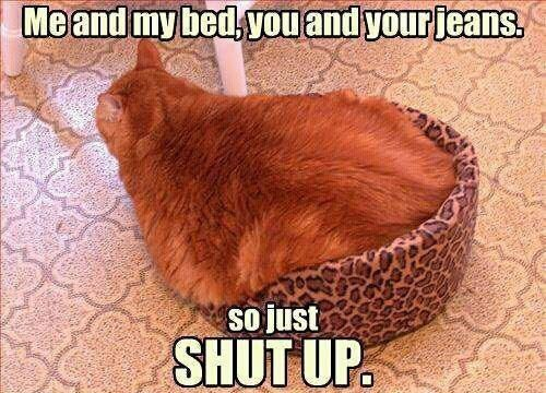 Me and my bed, you and your jeans. So just, shut up. A fat cat in a small cat bed.