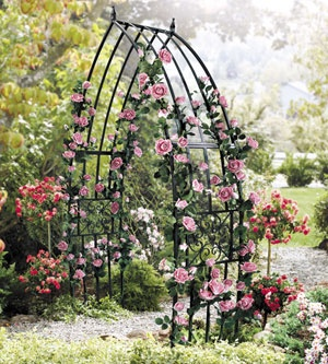 168 best Garden Arch images on Pinterest Garden