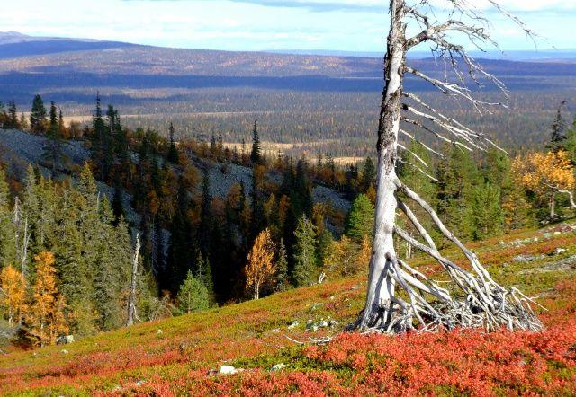Tuomikuru (gorge) of Yllästunturi fell. Pallas-Yllästunturi National Park, Lapland of Finland - Yllästunturin Tuomikuru Photo: Väiski / Luontoon.fi