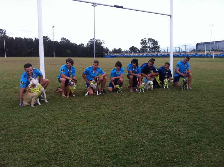 The Gold Coast Titans gearing up for Million Paws Walk with their pooches #RSPCAMillionPawsWalk #gctitans #rspcaqld