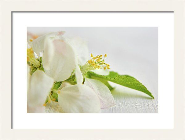 White Framed Print featuring the photograph White In Green by Marfffa Art