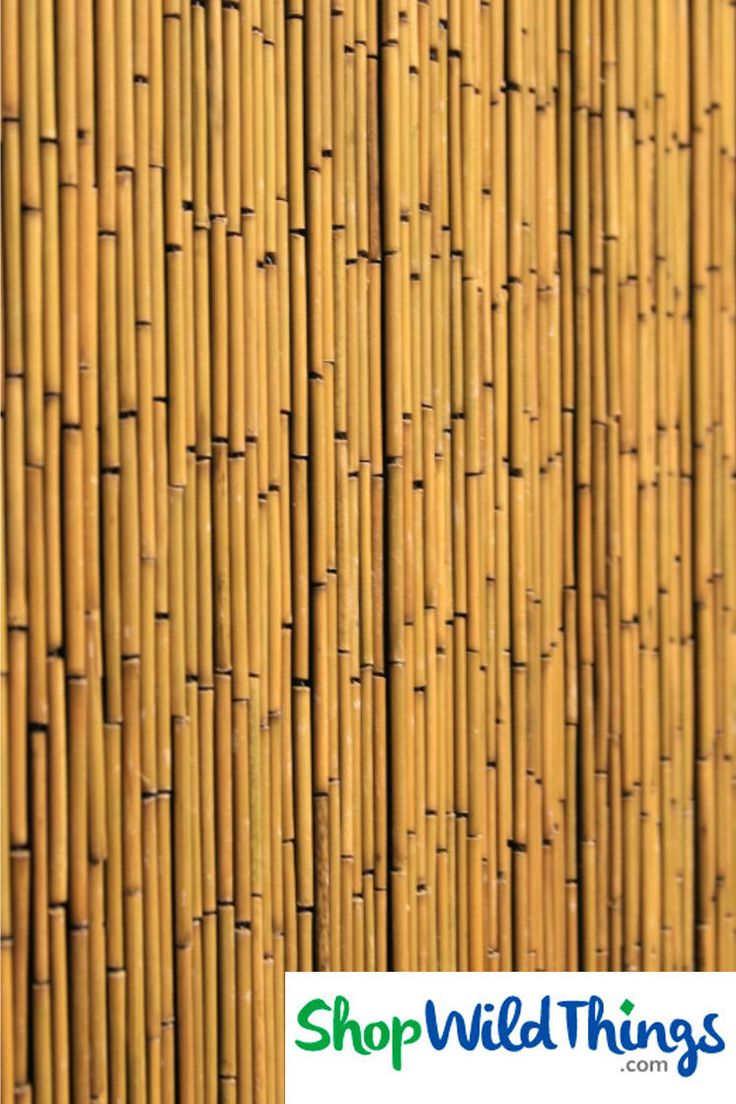 Coming Soon Plain Bamboo Curtain 125 Strands In Movie