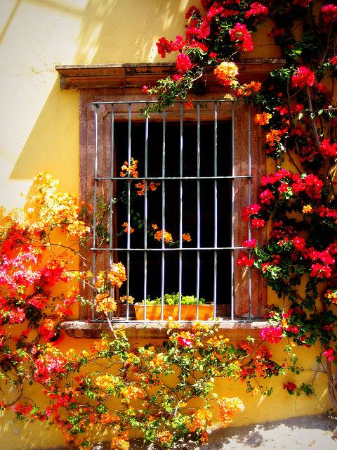love the flowers against the yellow wall....so eye-catching!!