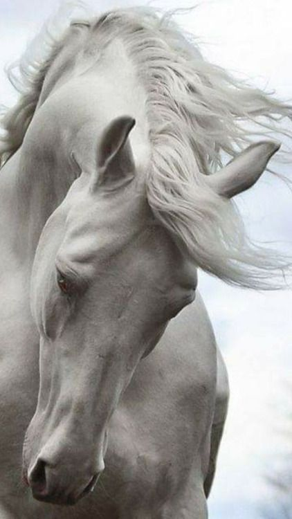 handsome Horse..
