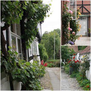 ROSENFLOR I RIBES GÅRDHAVER / Garden-visit in Ribe, Denmark