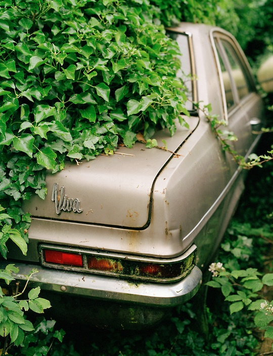 An old car - a Vauxhall Viva - covered in ivy.br / COPYRIGHT:©2004 Innis McAllister